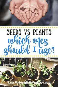 Planting a garden and wondering if you should start plants from seeds or use seedlings? Learn all about which plants you should start from seeds or if you're better off using transplants. Vegetable Garden For Beginners, Backyard Vegetable Gardens, Starting A Vegetable Garden, Gardening For Beginners, Buy Plants, Small Plants, Growing Sweet Corn, Lettuce Seeds, Bean Plant