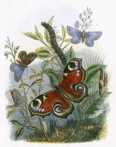The Butterfly Vivarium Art Print by English School. All prints are professionally printed, packaged, and shipped within 3 - 4 business days. Thing 1, Vivarium, Beautiful Butterflies, Bird Art, All Print, Art School, Fine Art America, Insects, Fabrics