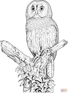 get the latest free owl coloring pages barn owl free images favorite coloring pages to print online by