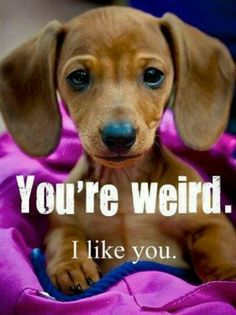 I think this is how my Dachshund puppy feels about me...