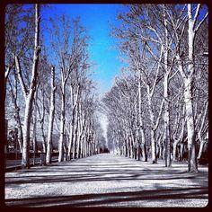 Árboles clamando al cielo, en el Parc De La Devesa, en Girona