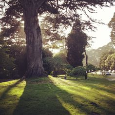 """""""Playing under the tree in Golden Gate park."""" By ohhappyday"""