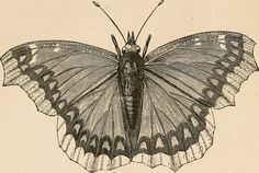 """Image from page 27 of """"The butterfly hunters"""" (1868) 