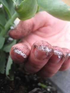 Not everyone likes the feeling of doing manual labor while sporting a pair of gloves. As far as gardening goes, wearing gloves doesn't necessarily mean your hands and nails won't be dirty at the end of the day anyway! If you are looking to prevent the charming appearance of soil-stains beneath your nails—not to mention the intense scrubbing that follows—check out this simple tip!