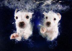Doggies under water