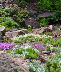 Three Dogs in a Garden: The Rock Garden, Part 3: Creative Ways to Use Texture