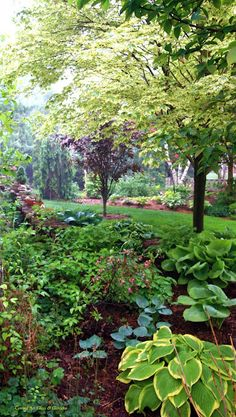 Pretty green foliage, perfect for shade, surrounds a Japanese maple tree.