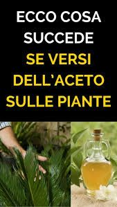 Here& what happens if you pour vinegar on the plants , Garden Bugs, Garden Care, Garden Plants, Outdoor Plants, Outdoor Gardens, Small Flower Gardens, Flower Meanings, Marimo, Tree Care