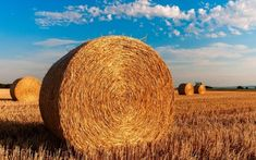 La tavola rotonda a Fico Eataly per i 20 anni di Agrimpresa, il mensile di Cia Emilia Romagna    Con quali criteri i redattori ricercano e selezionano le notizie in tema di agricoltura? E...