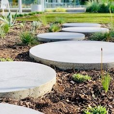 Hungry Wolf Studio Pty Ltd ( Australian Native Garden, Poured Concrete, Stepping Stones, Paths, Exterior, Photo And Video, Studio, Create, Outdoor Decor