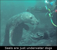 That's what seals really are… (GIF)