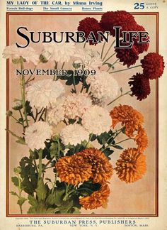 November 1909 Suburban Life magazine cover showing the types of mums grown then. For the bungalow garden.