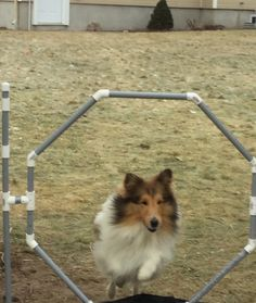 Homemade agility hoop jump and weaving poles that I got for Christmas. Agility Training, Dog Agility, Sheltie, Dogs, Weaving, Homemade, Christmas, Closure Weave, Yule