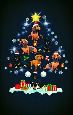 Christmas Mini Dachshund, Dachshund Puppies, Weenie Dogs, Christmas Animals, Christmas Dog, Christmas Greetings, Dog Shadow Box, Best Dog Breeds, Nouvel An
