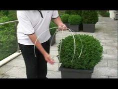 Buchsbaum schneiden mit egrola Kugelschnitt-Schablonen.mp4 - YouTube