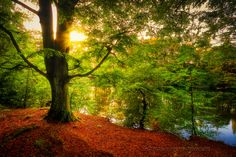 Lymm Damn, Cheshire, England