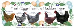 HaddanHens Egg Label - I designed this label to fit inside the Eggland's Best organic egg cartons that are clear plastic and washable. I had saved a bunch when we got our chicks last year. Since we only have five hens, I just give a carton now and then to the next door neighbors to keep them happy --haha-- and to other friends as well. People are intrigued by the greenish-blue eggs. I add a couple in each dozen to compliment the brown ones. They also enjoy seeing the hens' photos, names, and…
