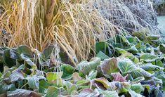 Nyheter - AMJ trädgårdstjänster My Design, Vegetables, Garden, Plants, Garten, Lawn And Garden, Vegetable Recipes, Gardens, Plant