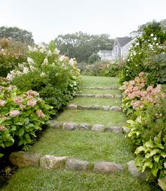 Pretty Path 'Tardiva' and 'Annabelle' hydrangeas, 'Diana' Rose of Sharon hibiscus, and Hosta plantaginea line the walkway behind this Martha's Vineyard home.