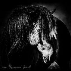 Marquard-foto - Heste