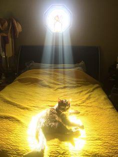 これは神々しい!(笑)窓から入る光のせいで『選ばれし者』みたいになったネコ【画像】 | COROBUZZ
