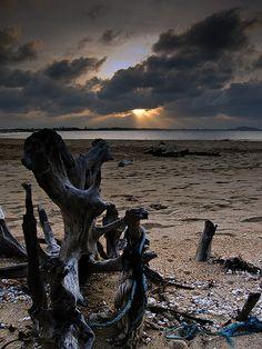 Driftwood in Merang