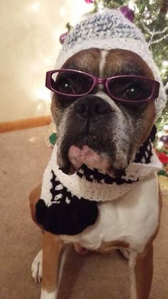 Ali is such a good sport. #boxer #funny #dog