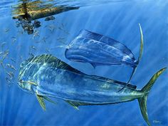 """Mahi about to feast! """"Happy Hour"""" found a new home in South Florida!"""