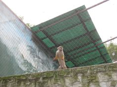 stainless steel cable netting the initial applicaiton, as a animal fence/cage, the cable is soft and flexible, it is soft , flexible, re-rust and strong, it is the best choice for the animal keeping in zoo or home