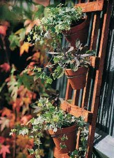 Have some old clay pots lying around? Brighten up a bare fence or wall with this simple pot trellis. You can change the look as often as you like—just unhook the pots and pop in fresh plants. Get the DIY instructions at BirdsandBlooms.com