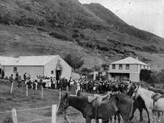 A crowd gathered at Ahipara on Maori Land Court day. On the right is J W [James Work] Reid house. Quantity: 1 b&w original negative(s). Historical Images, New Zealand, Landing, Law, Scene, Horses, Photos, Animals, Maori