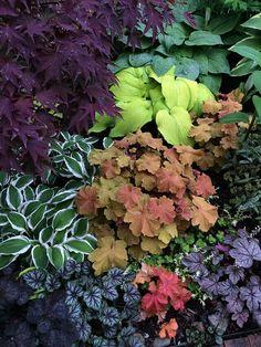 Tim Vojt is pushing coral bells and hybrids today - Fine Gardening Small Gardens, Outdoor Gardens, Shade Garden Plants, Ferns Garden, Purple Plants, Garden Planters, House Plants, Fine Gardening, Organic Gardening
