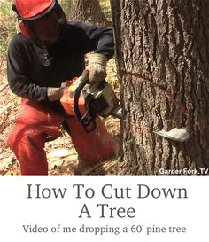 Video of me showing how to cut down a tree with the caveat that I am not a pro at tree felling, but here are the basics of using a chainsaw to drop a tree.