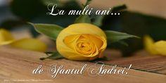 Birthday Wishes, Happy Birthday, Rose, Flowers, Plants, Happy Brithday, Special Birthday Wishes, Pink, Urari La Multi Ani