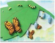 Claymation Metamorphosis lesson plan from dickblick: http://www.dickblick.com/lesson-plans/claymation-metamorphosis/