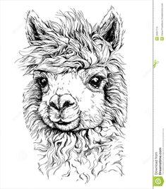 alpaca tekening - Google zoeken