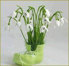 - The social network for meeting new people Vizsla, Meeting New People, Ikebana, Flower Arrangements, Glass Vase, Spring, Green, Plants, Design