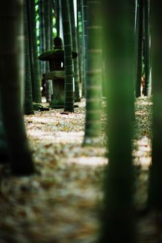 https://flic.kr/p/ezHP9X   bamboo grove