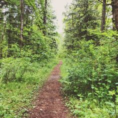 Mud Mountain Rim Trail | easy hike near seattle | huckleberryrainblog.weebly.com