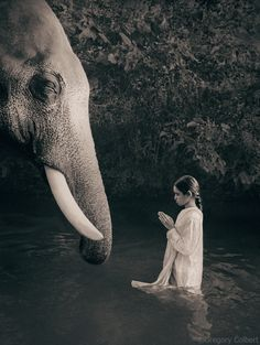 If the clouds are out tonight and there are no stars to wish upon, you can always make a wish upon an elephant. The elephants' tusks are wishing gates, and if you were to stand before them, what would you wish?—Gregory Colbert