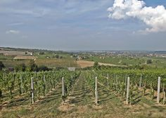Villany vineyards - Hungary