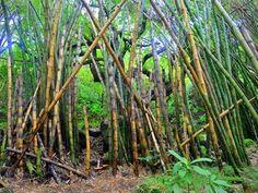 Hanakapiai Trail | Kauai.com
