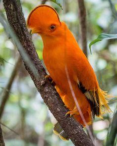 Pretty Birds, Beautiful Birds, Animals Beautiful, Cute Animals, Funny Animals, Rare Birds, Exotic Birds, Colorful Birds, Crazy Bird