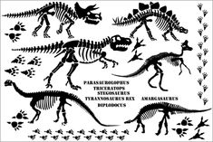 dinosaur bone template - Google Search