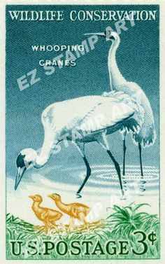 U.S. - a wildlife conservation series stamp from 1957