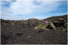 Lanzarote Lanzarote The strange volcanic soils of Lanzarote greet you also the islands serenity and silence urge individuals to disconnect…