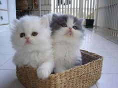 2 kittens in basket