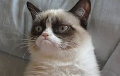 Facts about Grumpy cat