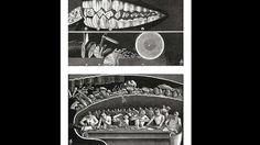 Der Kauakt (1939)Fritz Kahn verglich das menschliche Gebiss mit einem Handwerkerkasten, der verschiedene Werkzeuge enthält: Die Schneidezähne zerschneiden die Nahrung (a), die Eckzähne stechen in sie ein (b), die Reißzähne zersägen sie (c) und die Mahlzähne (d) zermahlen die Krümel. Die Zeichnung darunter bildet die Zunge ab: Sie verwandelt die von den Zähnen zerkleinerte Nahrung in einen Brei. Sie ist mit Warzen besetzt, die die Form von Keulen, Rollen, Reibeisen und Bürsten besitzen.