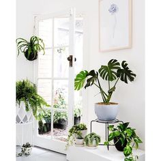"""""""Ivy Muse Shop 